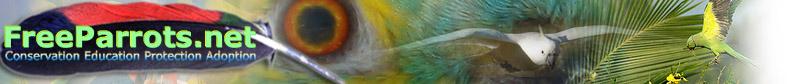 Free Parrots